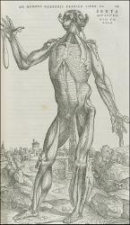 From Vesalius' De Humani Corporis Fabrica