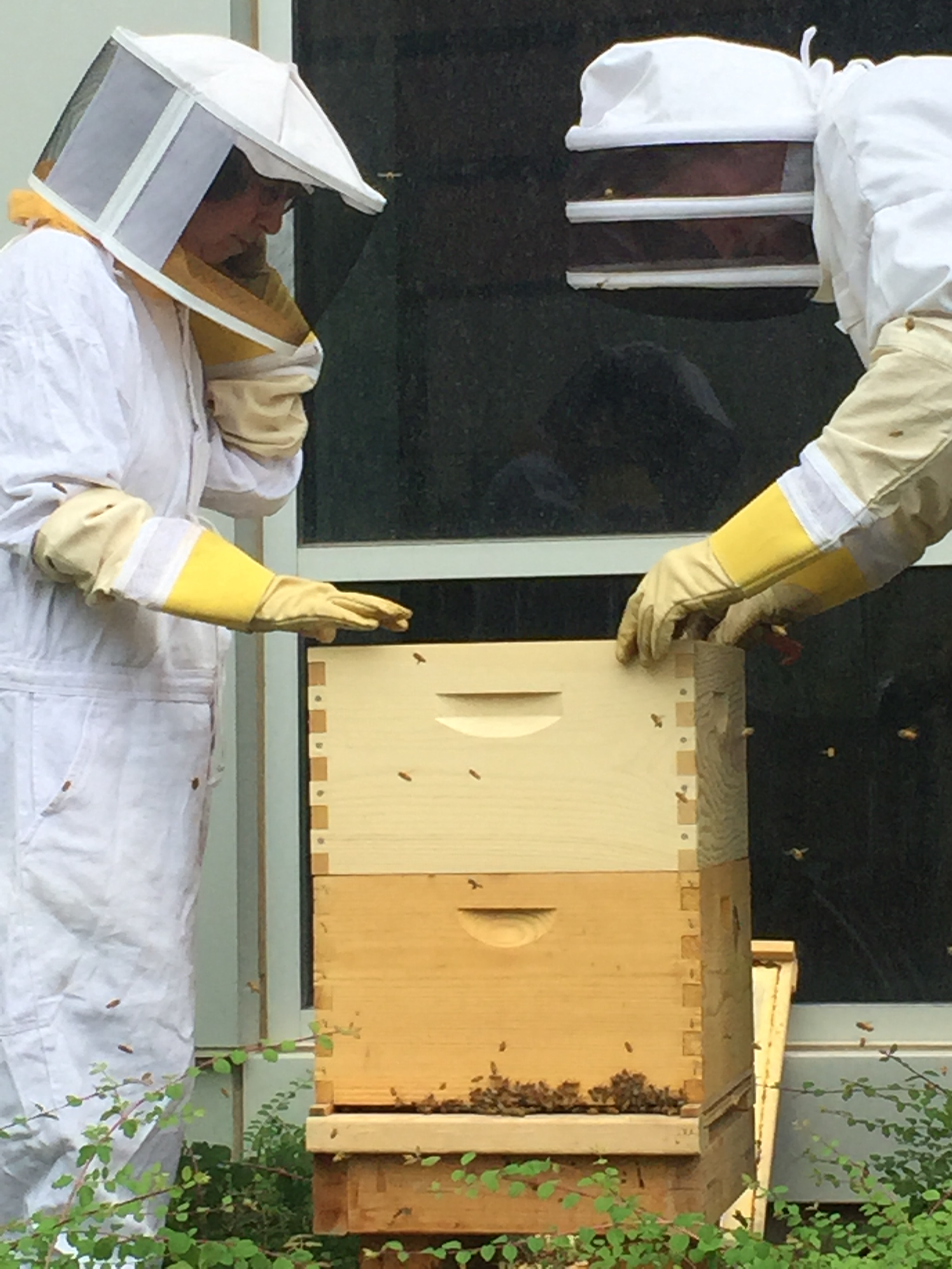 Beehives at HSEB