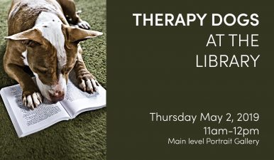 Therapy dogs at eccles library