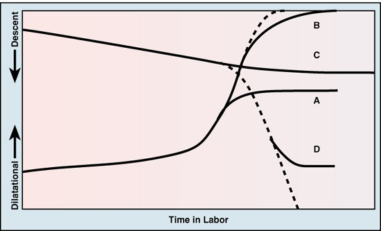 hrphysioL06 Physiology of Normal Labor and Delivery: Part I and II