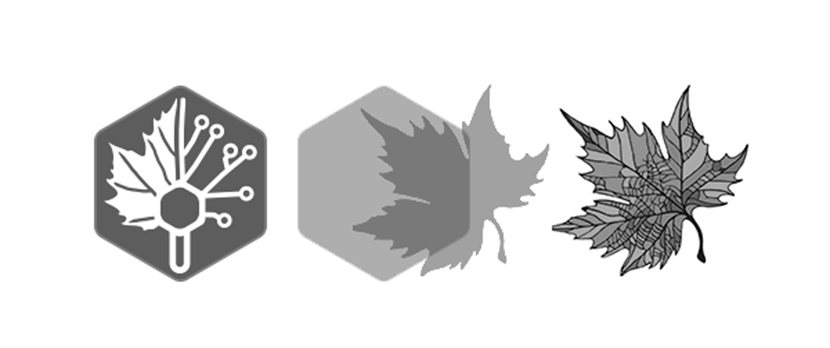 Merging two EHSL leaf styles to form the 50th Anniversary logo