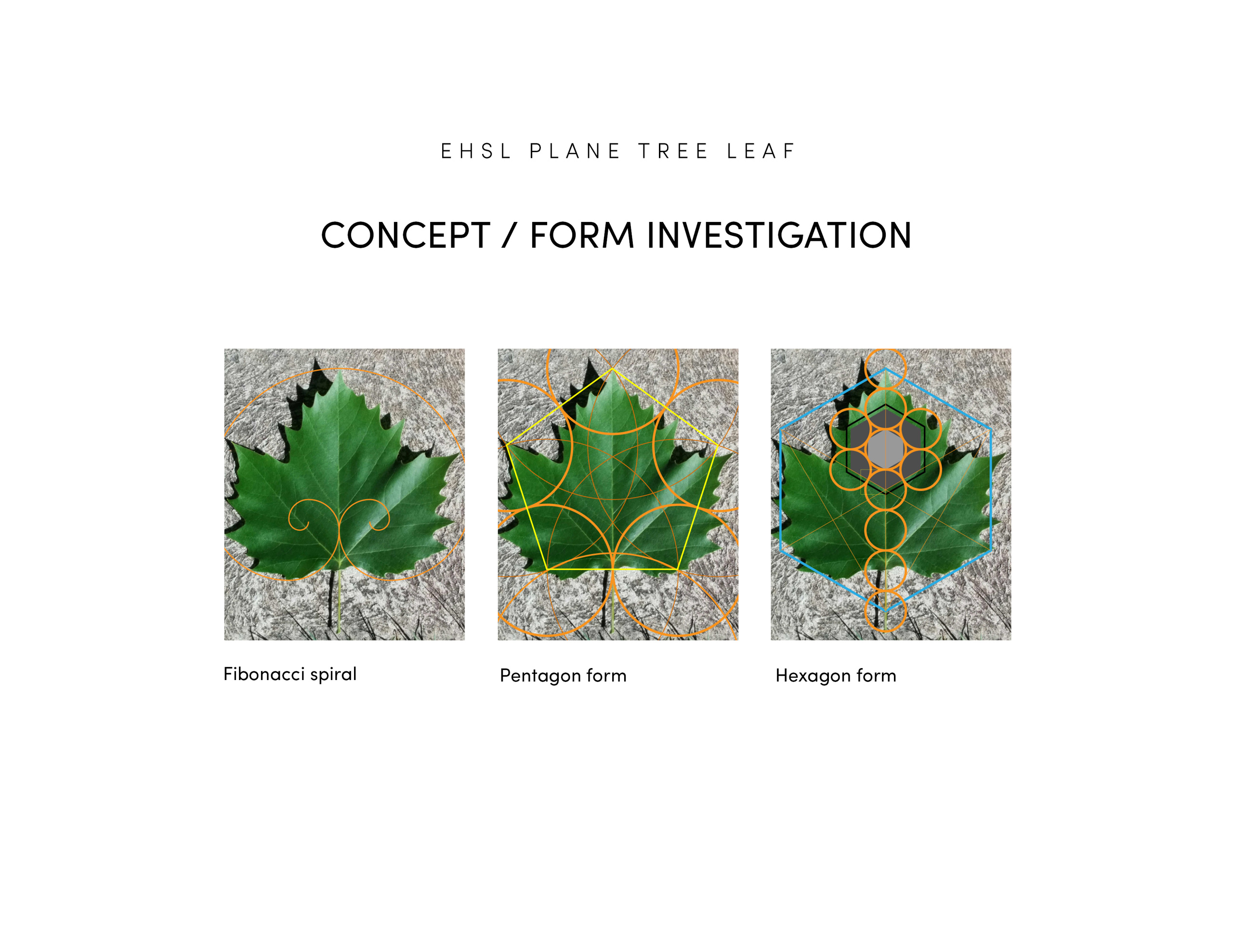 EHSL Plane Tree Leaf Geometry Diagrams
