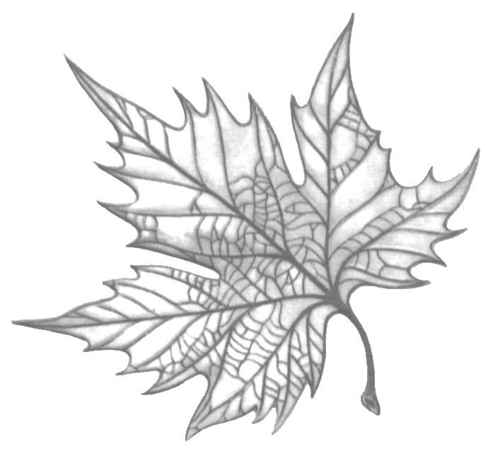 Leaf of Hippocrates (Logo circa 1973)